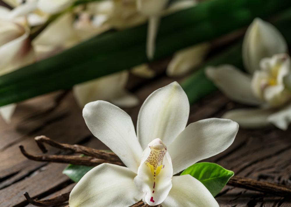 fleur de vanillier